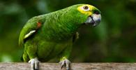 Papagaio ficará com a dona que convive há mais de 40 anos
