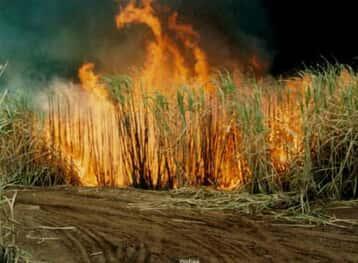 JF suspende queima da palha da cana-de-açúcar na região de Piracicaba