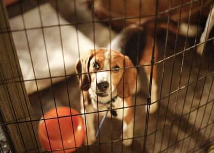 Sancionada lei paulista que proíbe testes em animais