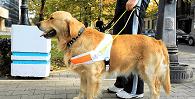 Uber e motorista indenizarão por negativa de transporte de deficiente visual com cão-guia