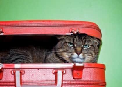 Companhia aérea terá de indenizar passageira pelo extravio de seu gato