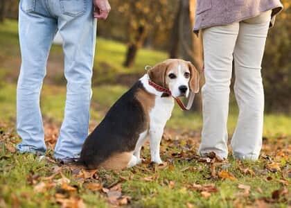 Justiça de SP determina guarda alternada de animal de estimação