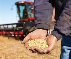 Monsanto está proibida de cobrar royalties sobre soja transgênica