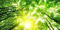 Decreto permite conversão de multa ambiental em prestação de serviços