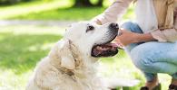 STJ discute possibilidade de regulamentar visitas a animal de estimação