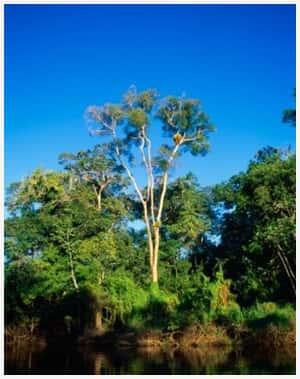 CCJ do Senado aprova projeto de reforma do Código Florestal