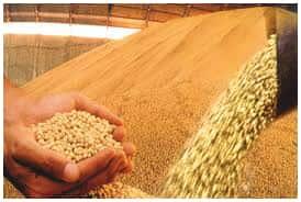 STJ começa a decidir se ação de sojicultores gaúchos contra royalties da Monsanto tem alcance nacional