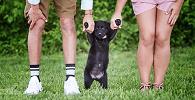 Vara de Família tem competência para decidir guarda compartilhada de animais