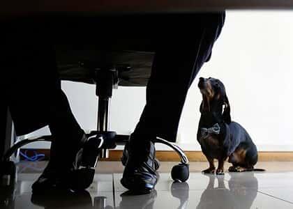 Disputa entre casal por guarda de cão vai parar no STJ