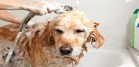 Cliente não deverá indenizar pet shop por reclamação em Facebook