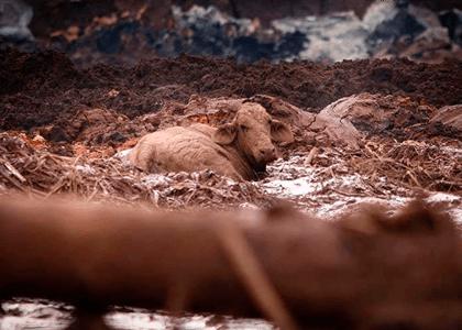 Justiça de MG manda Vale resgatar animais da lama