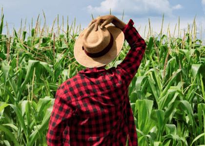 Trabalho rural intermitente não garante reconhecimento de vínculo empregatício