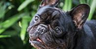 TJ/GO concede guarda de animal de estimação a mulher após término de relacionamento