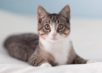 Condomínio não pode proibir animais que não oferecem risco