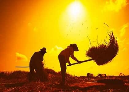 Falta de banheiros e ambiente para descanso de trabalhador rural viola dignidade humana
