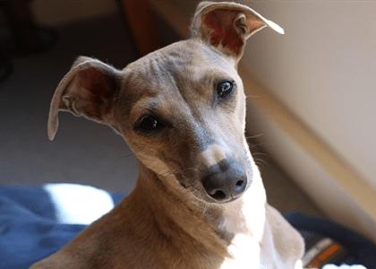 Discordância quanto a cuidados de animal de estimação não impede posse compartilhada