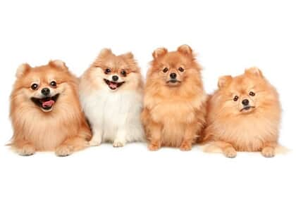 """""""Latem muito"""", diz juiz ao determinar que condômina se desfaça de cães"""