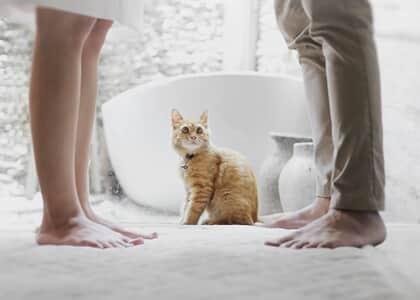 Justiça de SC determina guarda compartilhada de gatinho Mingau