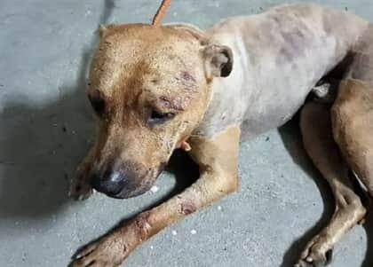 TRT-11 repudia postagens falsas ligando juiz de Manaus a soltura de presos por rinha de cães em SP