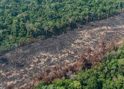 União, Ibama, ICMBio e Funai devem adotar ações imediatas contra desmatamento na Amazônia