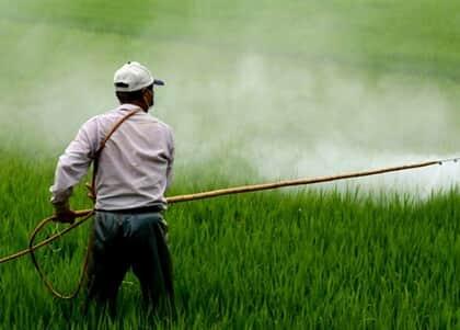 Liberação de agrotóxicos pelo ministério da Agricultura é questionada no STF