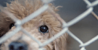 Resolução define com clareza conceito de violência contra animais