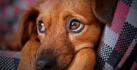 """Senado: PL que tira status de """"coisas"""" de animais vai ao plenário"""