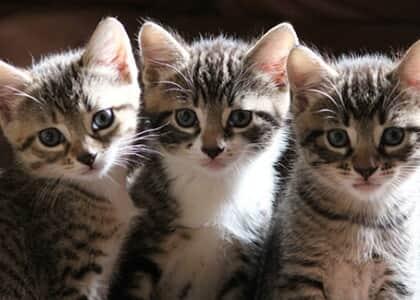 """Juiz não deixa associada furar isolamento para alimentar gatos em clube: """"raça humana está em risco"""""""