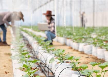 Banco não pode consolidar propriedade essencial para atividade de produtores rurais em recuperação