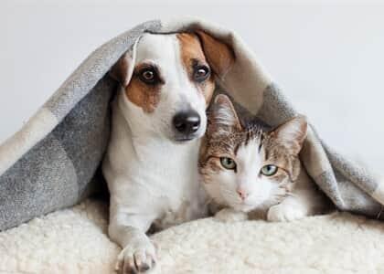 Câmara aprova aumento de pena para quem ferir cães e gatos